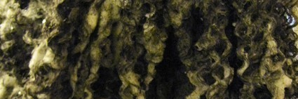 Sudsy natural hair image